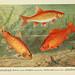 Unsere Süßwasserfische