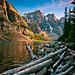 Driftwood - Moraine Lake