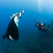 Me and the Manta by - drsteve -