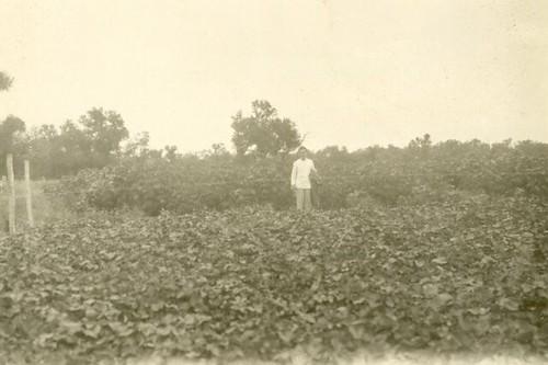 Hoffnungsfeld Sweet Potato And Mandioca Garden