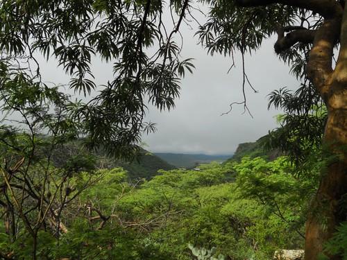 La selva de Calvillo