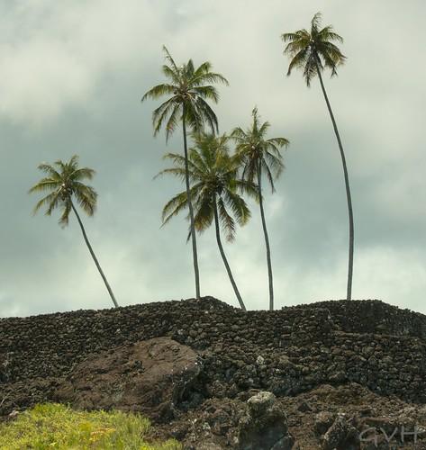 Pi'ilanihale Heiau at Kahanu Gardens