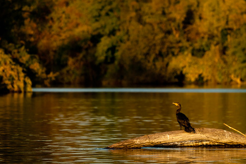 autumn color bird water animal landscape 300mm