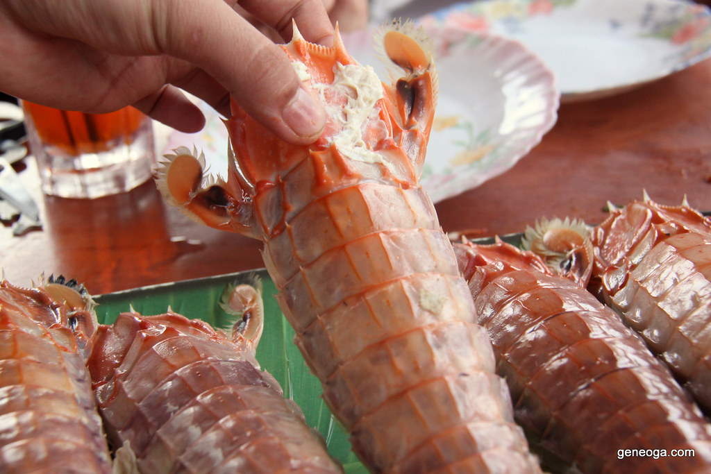 Gigantic mantis shrimp