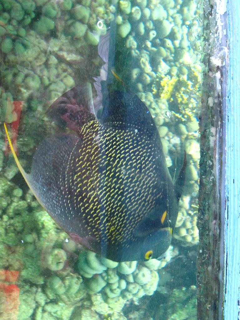 Buccoo Reef Trinidad And Tobago Tripomatic