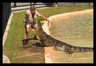 Australia Zoo Steve Irwin feeding Crocodile=