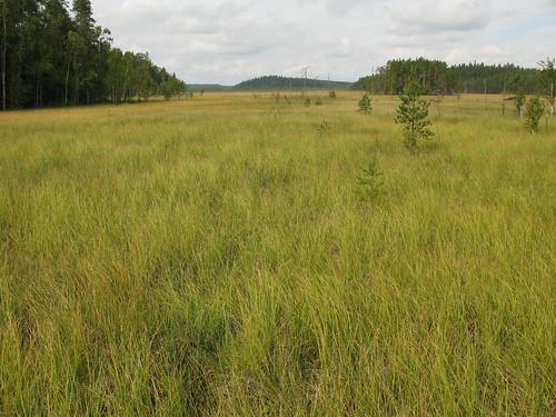 nature finland geotagged europe fin ruovesi 2011 siikaneva geo:lat=6182875088 geo:lon=2418676512
