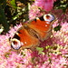 Small photo of Butterfly on a flower