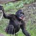 zoo praha 239 by katka789
