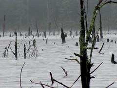 Briery Creek Wildlife Management Area