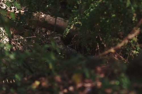 bird heron birds ga georgia egret avian herons egrets gbh avians columbusga coopercreek enlargerlens columbusgeorgia ilexgreatblueheron