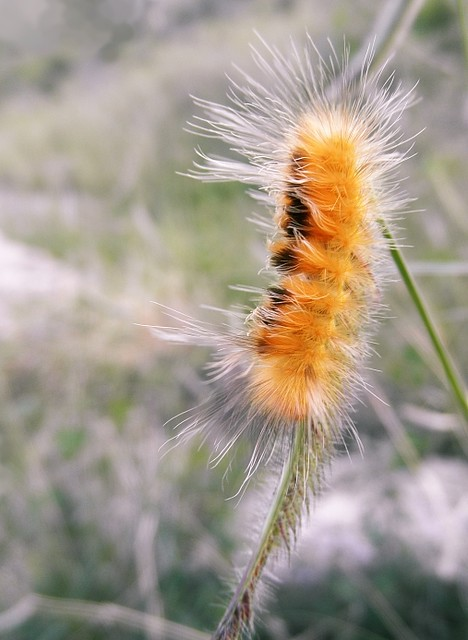 Fuzzy Caterpillars http://www.flickr.com/photos/floralfawn/6137909431/