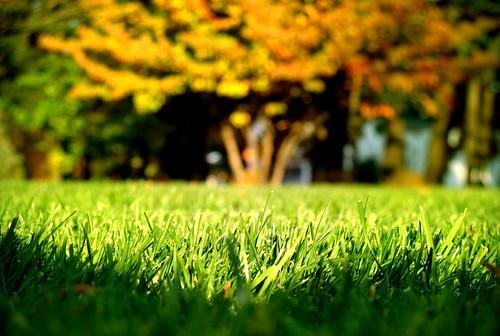 tree grass photo