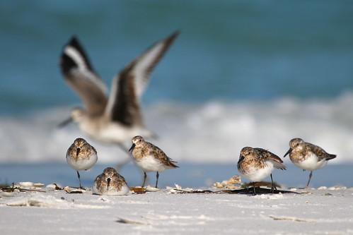 birds pictures