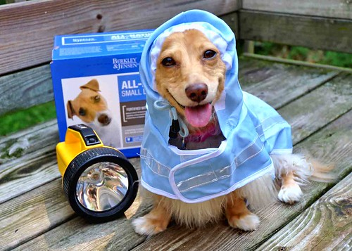 Hurricane Preparedness Doggy Style by Doxieone