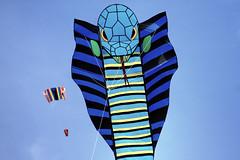 kite sports, symmetry, illustration, blue,