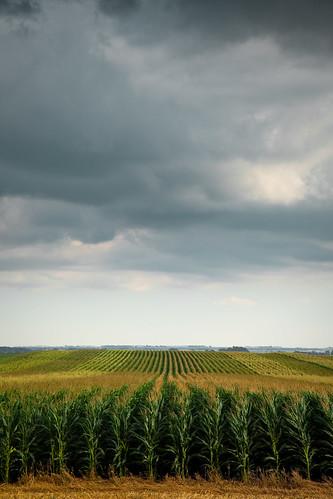 Iowa Monoculture_