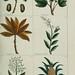 Plantes usuelles, indigènes et exotiques