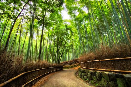 beautiful japan kyoto glow arashiyama majestic magical hdr sumer bambooforest 2011 3xp summerbreak arcreyes agustinrafaelreyes