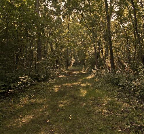 This Path I Tread