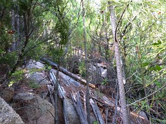 Tranchée avec arbres, arbustes, buissons et rochers entremêlés