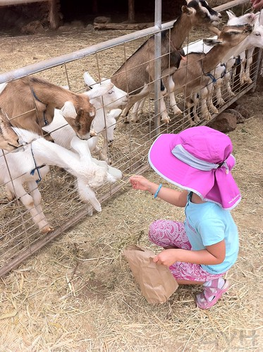 Snack time at Surfing Goat Dairy