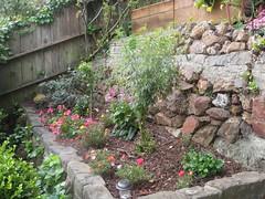 shrub, flower, stone wall, garden, yard, landscaping,