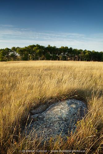 canada nature rock vertical landscape northamerica prairie saskatchewan sunrisesunset grassland westerncanada naturedetail natureconservancyofcanada canadianprairies aspenparkland verticalphoto branimirgjetvaj