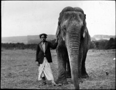 Elephant and man in field