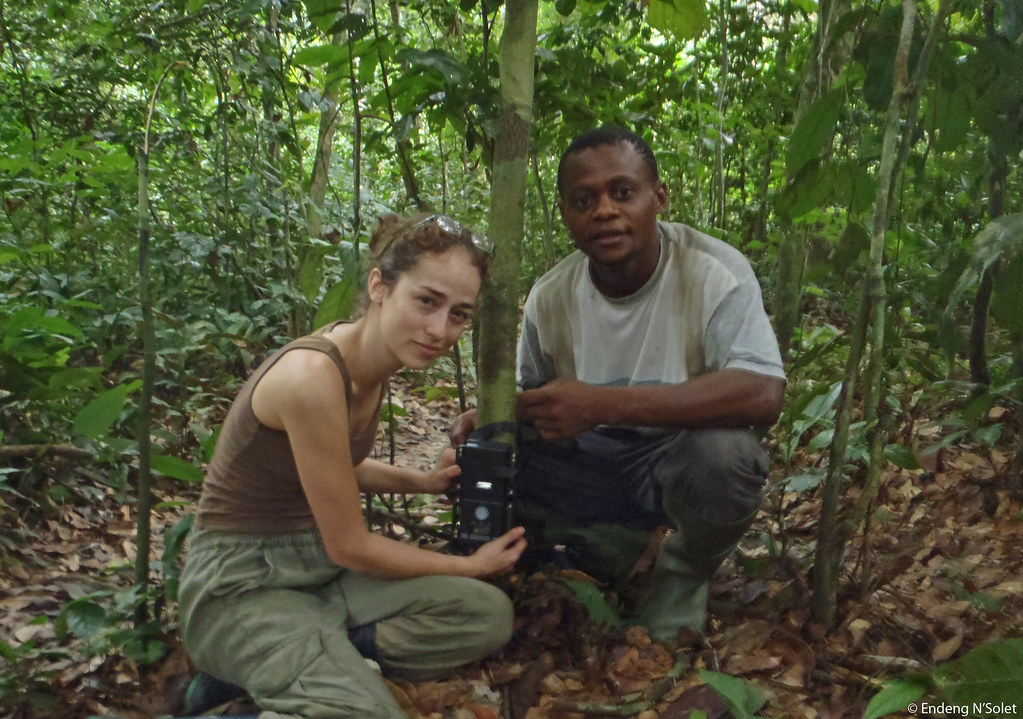 This image features Panthera Kaplan scholar Laila Bahaa-el-din setting up a camera trap with her field assistant in Gabon. Recently, cameras set by Laila in Gabon filmed the first video footage of a wild, living African golden cat.   See the first video footage of a wild African golden cat and get more information about this elusive wild cat at bit.ly/pNCOoz.