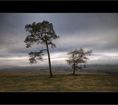 Tree's and Windfarm