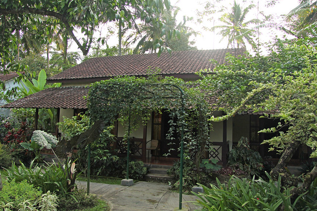 Margo Utomo - Kalibaru (Java - Indonesia)