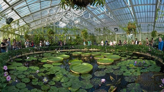 o knοç : garden (Kew Gardens Waterlilly house, London)
