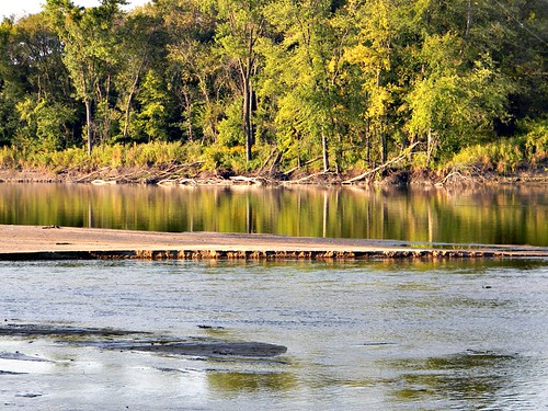 trees summer forest river shoreline sandbar iowa cedarriver