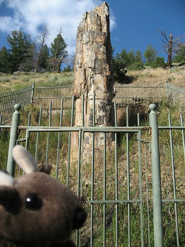 Buddy Bison with a petrified tree in Yellowstone National Park.