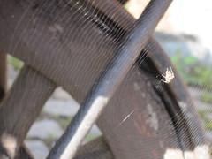 Charlotte's wheely web