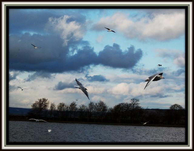 The freedom of flight !!!, Fujifilm FinePix AV110