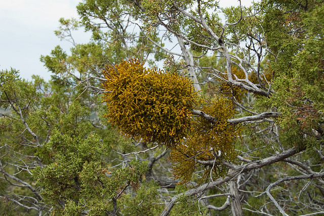 Heterotrophic plants  Visual Dictionary  IKONETCOM