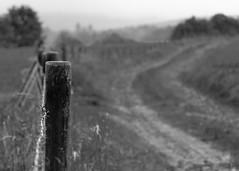 Sonntagsbild: Fence