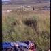 1993 EASA SHETLAND 07