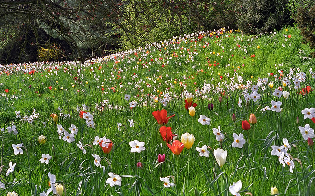 Ascott House Gardens, Buckinghamshire, UK | National Trust gardens with flowering meadows full of tulips and narcissi in spring (9 of 22)