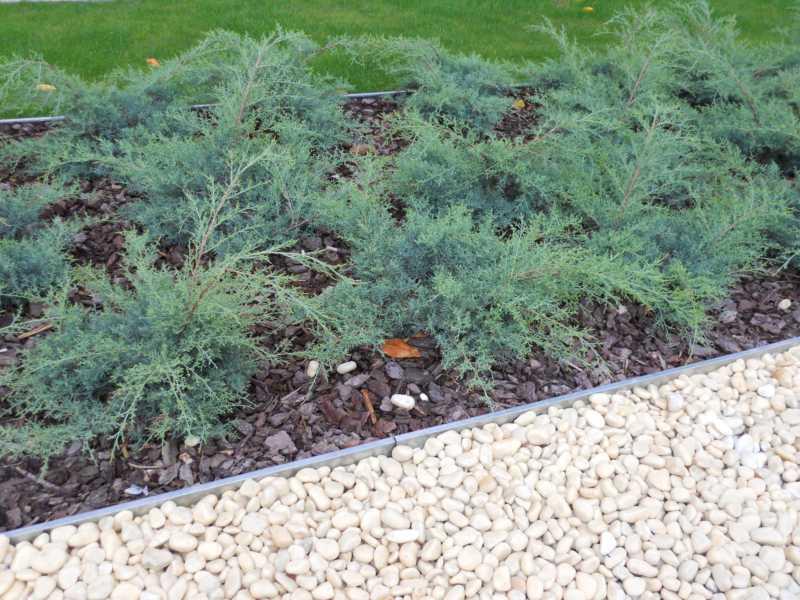 Jardineros en acci n jard n de bajo mantenimiento for Jardines con poco mantenimiento