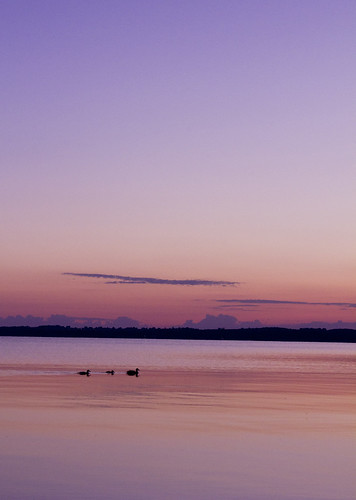 morning water photography michigan ducks 1855mm traversecity canoneosrebelt2i jennicaw