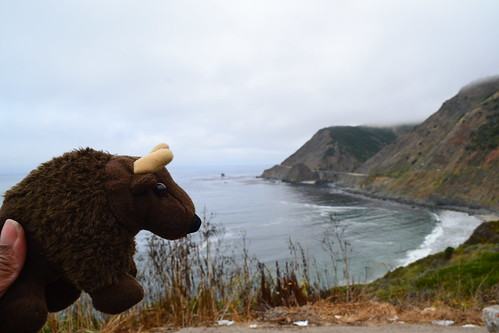 Buddy on the Pacific Coast Highway, CA