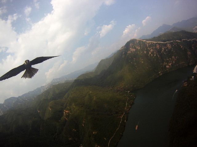 Falcon Attacks (KAP Rig) @ The China Great Wall