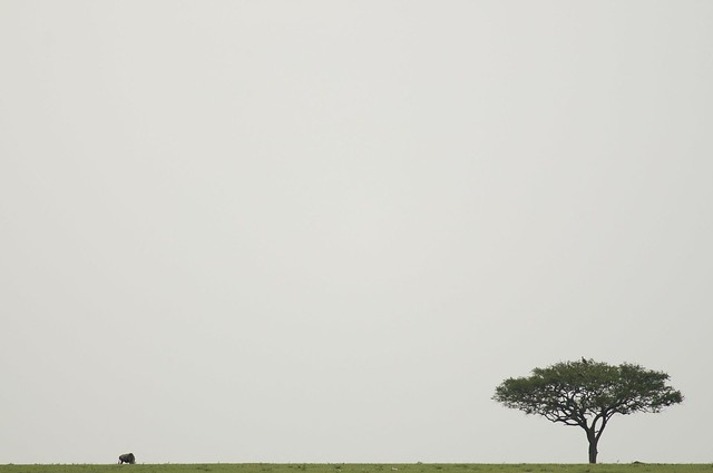 6129816108 cbbf9976bb z [Pics] Flickr Spotlight – Lonely Trees