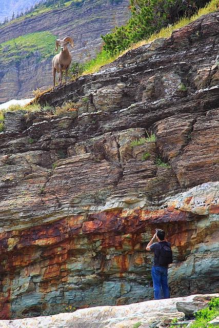 IMG_7409 When Hiker Meets Bighorn Sheep
