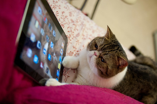 iCat hits the iPad Home button