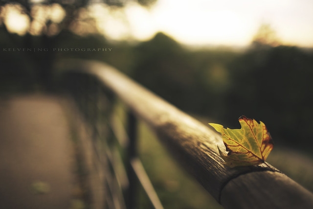 Hanging on for the weekend - Beautiful Bokeh Photography