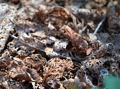 dead leaves close up